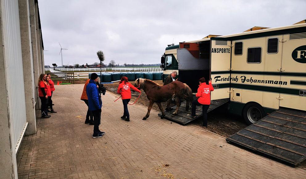 Ankunft der Zirkuspferde auf der GUT AIDERBICHL Ballermann Ranch im niedersächsischen Blockwinkel, Gemeinde Scholen