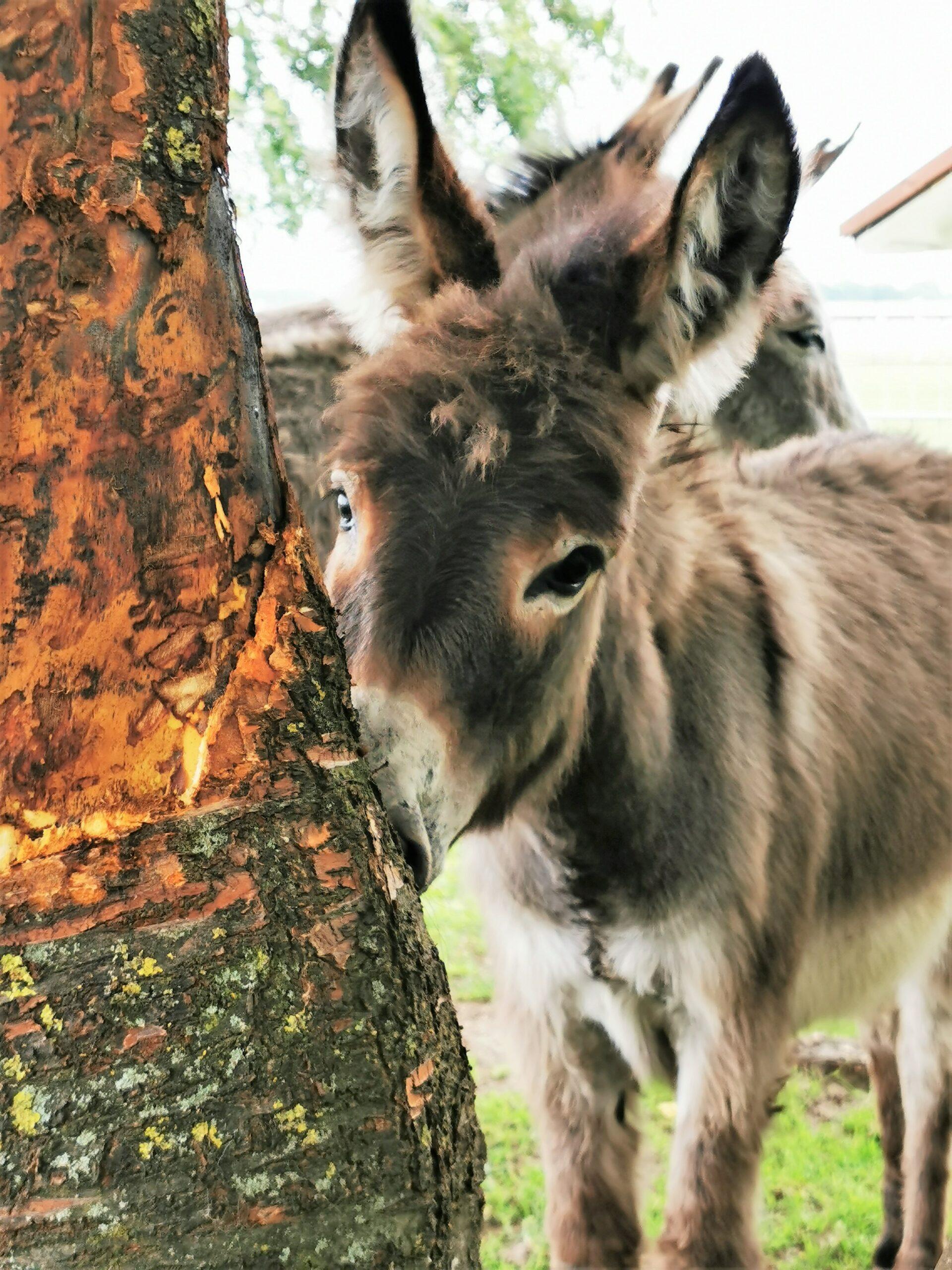 Ballermann Ranch: Eselbaby Sally Wird Eins