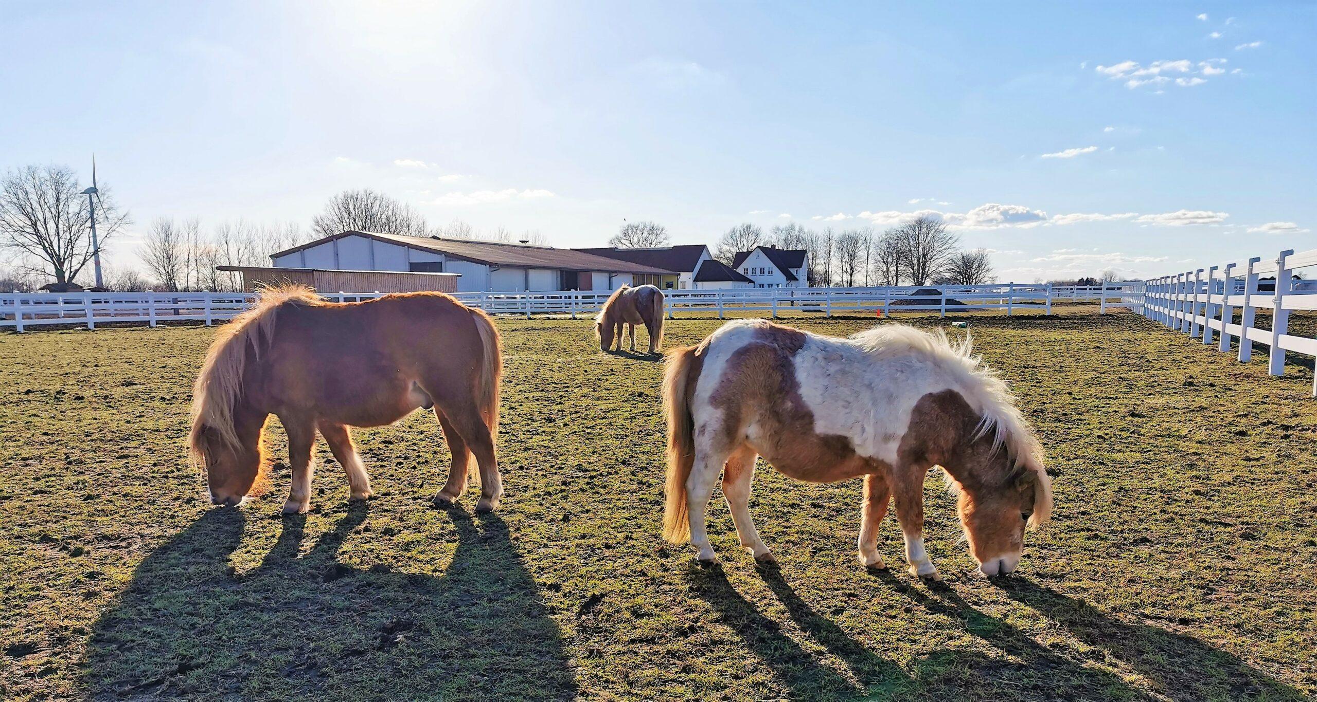 Ballermann Ranch Plant Öffnung Am Ostermontag